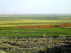 Fields_of_moab_south_of_arnon_with_